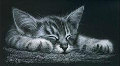 Irina Garmashova-Cawton - Artiste Peintre Animalier - Spécialiste des Peintures et Portraits Félins - Noir & Blanc - Chat endormi