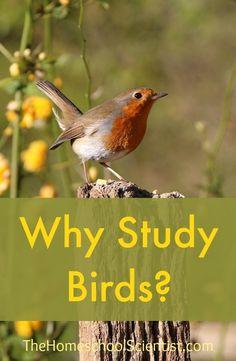 Why Study Backyard Birds
