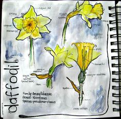 Stone Soup for Five: Just some nature journaling
