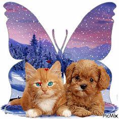 chat et chien et papillon