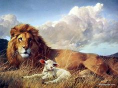 A lion and a lamb laying together in the field as the wind blows all around them just goes to show there can be PEACE ON EARTH. A wonderful animal print by Nancy Glazier. Arte Lds, Lion And Lamb, Lion Painting, Jesus Art, Jesus Christ, Le Roi Lion, Like A Lion, Prophetic Art, Lion Of Judah