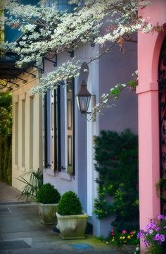 Rainbow Row, Charleston, South Carolina (Another of those places I would love to go back to and take my husband! Charleston Caroline Du Sud, Charleston South Carolina, Charleston Sc, Carolina Usa, Rainbow Row Charleston, Charleston Gardens, Oh The Places You'll Go, Places To Travel, I Need Vitamin Sea