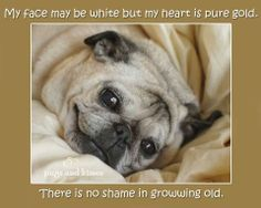 My face may be white, but my heart is pure gold. There is no shame is growing old.
