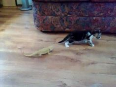 I laughed so hard at this kitty & lizard! The slight overreaction. | 31 GIFs That Will Make You Laugh Every Time