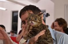 Cute Bub the cat at buzzfeed office <3!