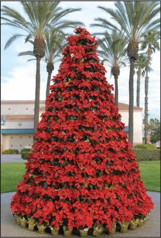 Poinsettia Tree in Red Only Southern Christmas, Merry Little Christmas, Christmas Holidays, Christmas Ideas, Holiday Tree, Xmas Tree, Christmas Tree Decorations, Outdoor Christmas, Christmas Wedding