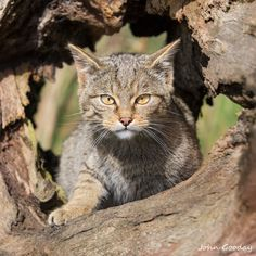 Photograph Curiosity and the wildcat by John Gooday on 500px