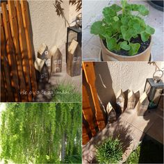 Vše o co se zajímám: Květena a popis Plants, Lavender Bags, Plant, Planets