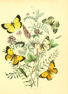 Amazing Botanical Illustration with butterflies