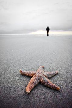 starfish .