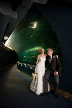 Weddings at the Two Oceans Aquarium – Gallery – Two Oceans Aquarium Cape Town, South Africa