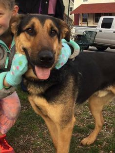 """Taz will """"have you at hello""""  This gentle giant is 70 lbs of sweet!  He is a german shepherd mix, friendly and affectionate LOVE HIM! www.ruffhouserescue.org for adoption application Email if you would  like to meet him today! ruffhouserescue@gmail.com #ruffhouserescue #adopttaz #adoptdontshop"""