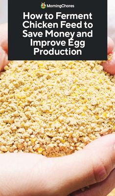 How to Ferment Chicken Feed to Save Money and Improve Egg Production - Pickity - Beauty, Food, Home Decor, DIY & Crafts