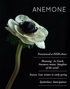 Design*Sponge Flower Glossary / Anemone Obsessed with you Anemone X Anemone Flower, Anemone Bouquet, Flower Meanings, Flower Names, Language Of Flowers, Floral Garland, Dream Garden, Wedding Flowers, Anemone Wedding