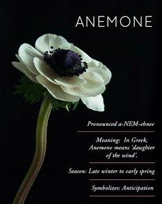 Design*Sponge Flower Glossary / Anemone
