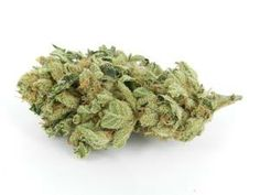 Hell's ANgel #Indica #Marijuana #Strain #Reviews #Pictures #w33daddict