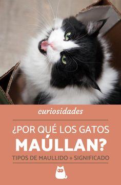 39 Ideas De Curiosidades De Gatos Gatos Mascotas Lenguaje De Los Gatos