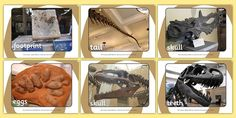 A rather fantastic set of display posters displaying helpful dinosaur fossil photographs. Great as a display or for carpet time discussions on the topic. Class Displays, Classroom Displays, Photo Displays, Dinosaur Display, Walking With Dinosaurs, Poster Display, Dinosaur Fossils, Eyfs, Footprint