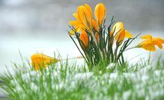 """Winterharte Pflanzen – Was ist überhaupt """"winterhart""""?  – Wann hilft ein Winterschutz? – Durchstöbern Sie unsere Themenseite mit Infos rund um winterharte Pflanzen."""