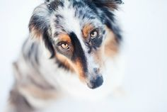5 Bad Behaviors Dog Parents Encourage (and how to reverse them)