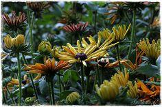 Flowers, Plants, Florals, Planters, Flower, Blossoms, Plant, Planting