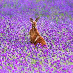 Jacqui Barker captured this cracker of a curious Kangaroo in the stunning Flinders Ranges, a mecca for quintessentially Australian wildlife
