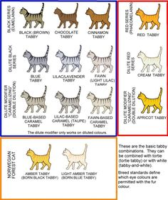 STRIPED, SPOTTED AND TICKED CATS