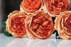 All Flowers, Clay Creations, Deco, Deko, Dekoration, Decoration, Decor