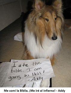 mascotas culpables15