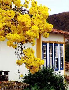 Yellow Ypê - Sao Joao del Rei - Brazil