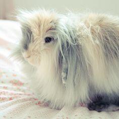 It's so fluffy, I'm gonna die!!!! #rabbit #bunny #fluffy