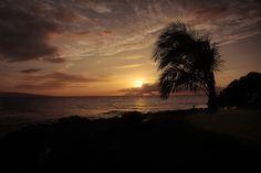 Goodnight Maui