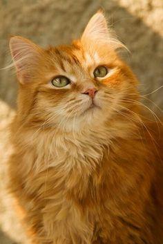 Beautiful kitty.