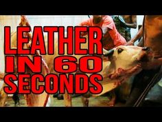 14 Things the Leather Industry Doesn't Want You to See | Features | PETA