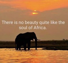 African Animals, African Safari, African Art, Beautiful Places To Visit, Oh The Places You'll Go, Winter Qoutes, Africa Quotes, African Proverb, Snoopy Quotes