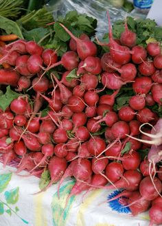 Information on growing radishes