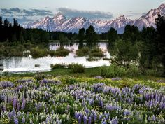 Grand Teton Park.  The beauty is hard to comprehend.  Everyone should visit this place.