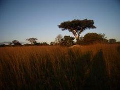 Antelope Park, Gweru, Zimbabwe