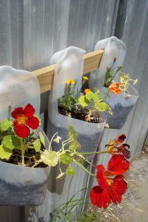 Milk bottle plant holders