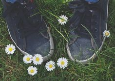 Sneakers shoes Canvas shoes Sneakers shoes on green grass and daisies. Free Stock Photos, Free Photos, My Photos, Green Grass, Daisies, Royalty Free Images, Commercial, Shoes Sneakers, Hipster