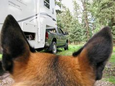 How to travel in an RV with pets