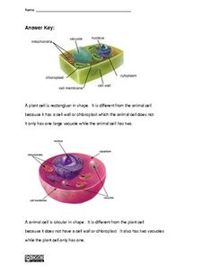 Plant and Animal Cell Worksheet