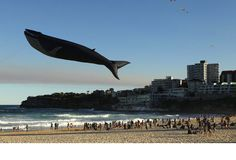 Whale, whale, whale... it's a kite! So awesome.