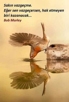 Petirrojo by bird photographer cesar pastor quesada on European Robin drinking; reflected in water. what a lovely photo! wonder how long Cesar had to wait for this perfect picture! Pretty Birds, Love Birds, Beautiful Birds, Animals Beautiful, Cute Animals, Small Birds, Simply Beautiful, European Robin, Photo Animaliere
