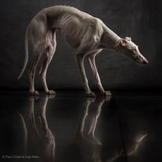 Paul Croes photography. & that is how starved my Peace was when she first came to me.