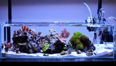 teamschreiba Congratulations to teamschreiba for being selected for our November Reef Profile! His 9 gallon nano reef is a stellar example of modern nano reef design. Below is the profile hes written for us sharing his experience in the h...