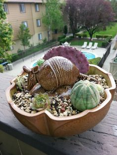 Armadillo cactus garden in an antique pot