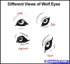 How To Draw Wolf - Yahoo Search Results Yahoo Image Search Results