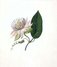Vintage passion flower