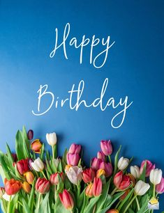 Happy birthday beautiful image with red, pink and white tulips on blue background. flowers Shine Like the Star You Are Happy Birthday Wishes For Her, Birthday Wishes Flowers, Happy Birthday Celebration, Birthday Wishes And Images, Happy Birthday Pictures, Happy Birthday Messages, Happy Birthday Gifts, Happy Birthday Greetings, Birthday Quotes